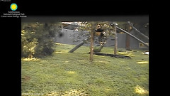 2016_07-09f (gkoo19681) Tags: nationalzoo dangling beibei ccncby