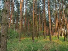 In the forest... (darkadi1) Tags: las forest pen poland polska olympus dblin deblin mzuiko m1442mm epl6