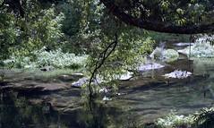 (emilyjasper) Tags: newzealand nz travel explore 35mm ishootfilm filmisnotdead film nikon fuji fujifilm water trees