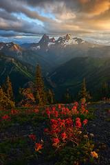 Alpine Paintbrush (arturstanisz1) Tags: flowers light sunset canada mountains clouds landscape britishcolumbia explore alpine paintbrush arturstanisz