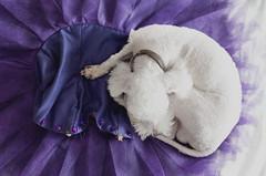 12/365 (Daniela De la Rosa) Tags: ballet dog dance danza pointe tutu tututuesday balletdog