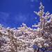 Beautiful blossom - part 7