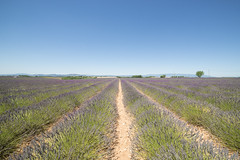 Lavanda (Mauro_Amoroso) Tags: sky panorama france green nature landscape nikon purple d2x lavander francia paesaggio nationalgeographic provenza lavanda natgeo d600 nital valensole nikonlandscape nikonitalia amorosomauroadventures mauroamorosoadventures