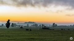 Amanece (Andres710) Tags: amanecer cow campo dia luz dawn nikon d3100 35mm aire libre