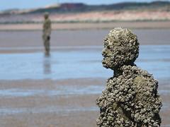 DSCF0736 (SierPinskiA) Tags: sea shells beach liverpool sand ironman pools barnacles ironwork mayday seashore merseyside anthonygormley irishsea 2016 anotherplace crosbybeach blundellsands fujixs1