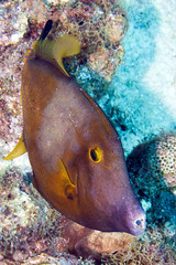 Curaao 2016 (mymbcn) Tags: scuba diving curaao 2016