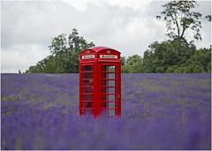 how did that get there? (hisdream) Tags: lavenderfields mayfield surrey phonebox