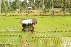 Pondok (muhafifphotos) Tags: pondok sawah