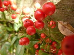 Berries (Raewyn48) Tags: scavenger7