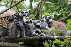 i Knuthenborg Park 1 (clearfotografie) Tags: travel detail nature animal tiere nikon natur safari dänemark tier d600 nikkoraf70210mm1456 knuthenborgpark