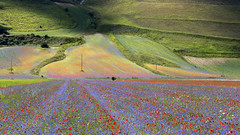 Piano di Castelluccio (P) Tags: blossom umbria castelluccio italia italy fioritura flowers fiori luglio norcia monti sibillini