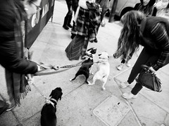 on south street (-{ ThusOriginal }-) Tags: bw blackandwhite city digital dog grd3 grdiii monochrome people philadelphia ricoh street thusihaveseen winter thusoriginal