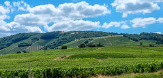 Au coeur du Beaujolais (Keinsei2) Tags: beaujolais vigne wine quincienbeaujolais rhne rhnealpes mont arbre trees verdure fujifilm xa1 paysage landscape nuage cloud ciel sky
