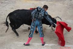 Juan Bautista (Bernard des Sagnes) Tags: 2016 canon arles provence paca corrida fériaduriz corridagoyesque toro juanbautista