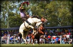 El poncho vino (Eduardo Amorim) Tags: gacho gachos gaucho gauchos cavalos caballos horses chevaux cavalli pferde caballo horse cheval cavallo pferd crioulo criollo crioulos criollos cavalocrioulo cavaloscrioulos caballocriollo caballoscriollos pasodeldragn plcidorosas cerrolargo uruguay uruguai sudamrica sdamerika suramrica amricadosul southamerica amriquedusud americameridionale amricadelsur americadelsud cavalo         hst hest hevonen  brazil eduardoamorim jineteada gineteada