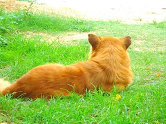very interesanting (Oh_nani) Tags: dog pet retrato perro espalda mascota pelirrojo mirando composición mejoramigo