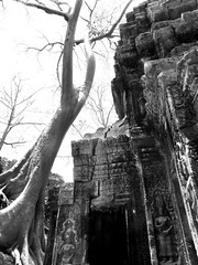 Ta Prohm Siem Reap Cambodia (shaire productions) Tags: old travel detail building tourism stone architecture temple design carved construction ruins asia cambodia southeastasia khmer image buddhist picture style buddhism landmark angkorwat carving structure architectural historic photograph jungle elements siemreap wat taprohm hindu siam imagery taphrom bayon archaic rajavihara