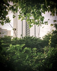 Natural window. (christiannass) Tags: explore iphone iphoneography deutschland photography inspired inspiring exploring germany mobile camera flickr traveling white window building architecture green