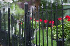 At the Garden Gate (~DGH~) Tags: 2016 alberta canada edmonton fencefriday july pentaxk50 summer fence flowers gate smcpentaxda50mm ~dgh~