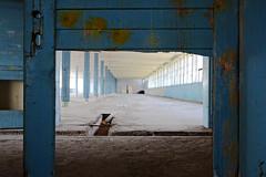 sogno di fuga possibile - a dream of a possible escape (francesco melchionda) Tags: blue abandoned colors factory decay urbanexploration decadence urbex cetinje