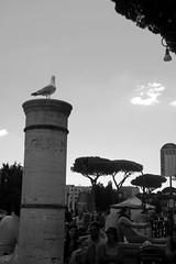Qualcuno vigila sulla citt (LikeTheHitter) Tags: riposo gabbiano romano roma rome bianconero mouette seagull bianco e nero monocromo architettura colonna allaperto vigilare vigila citt city watchman