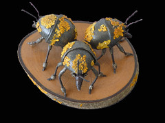 Three's a Plague (Steve Taylor (Photography)) Tags: wood newzealand sculpture brown black art yellow metal insect space beetle nz southisland lichen plague