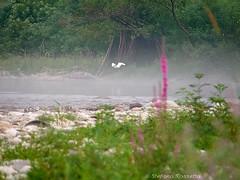 _S337391687 (Rosshox) Tags: naturalphotography natura wildlife action animals animali fujifilm fujifilmxs1 volatili