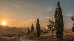 Golden were the hives - and golden was the honey; golden, too; the MUSIC. Henry VanDyke (marco soraperra) Tags: sunrise tree landscape sun light shadow nikon nikkor d750 valdorcia