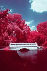 Carroll Park EIR (scott_z28) Tags: minolta srt101 md rokkor 28mm f28 kodak aerochrome 1443 eir ektachrome infrared color e6 slide transparency film orange021 fpp thedarkroom michigan mi tricities baycity carrollpark bridge