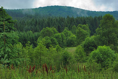 Forest (Hejma (+/- 4500 faves and 1,5milion views)) Tags: bieszczady national park polish landscape darkclouds tree forest meadows wildflowers grazing hills