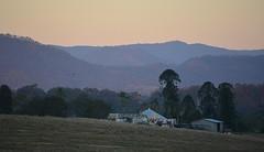 'Tamrookum' (dustaway) Tags: landscape dusk tamrookum loganvalley sequeensland queensland australia australianlandscape ruralaustralia rurallandscape farmhouse outbuildings araucariaceae araucariabidwillii bunyapine