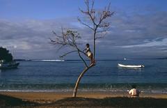 Bali, Padang Bai, boy in the tree (blauepics) Tags: indonesien indonesia indonesian indonesische bali island padang bai water wasser meer sea coast kste beach strand sand bay bucht boy junge playing spielen child kind tree baum