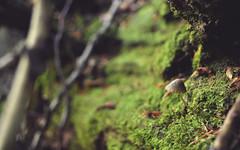 (Janshi -) Tags: primeval forest razula woods mushroom