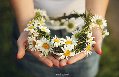 Summer in her arms (Dasha May) Tags: camomile daisy wreath garland arms summer flowers