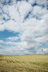 (Px4u by Team Cu29) Tags: landwirtschaft acker ackerfurchen pflanzen wachsen wachstum hgel