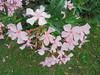 051 (en-ri) Tags: fiorellini flowers sony sonysti erba grass