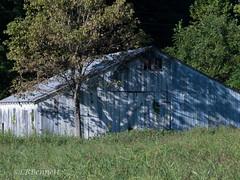 P9119432-edit1LB-2LBB (lbbennett1) Tags: sidelight barn trees shadows rrpa0916