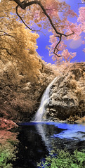 Oneiric waterfall (Helder Faria) Tags: 590nm d5100 lifepixel supercolorfilter nik falsecolor panormica panoramic panorama cachoeira waterfall chapadadosguimares matogrosso brasil brazil bra ir infrared infravermelho onirico lisrgico oniric lysergic colorful paisagem cerrado savannah savana water agua cor cachoeiradasandorinhas parquenacional park paisaje ngc landscape