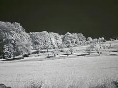 DSC00226re_v1 (vorinami) Tags: nature ir infrared f828 hoya r72