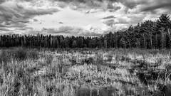 Up north (VNR Photography) Tags: sunset sky blackandwhite ontario canada water field clouds canon outdoors countryside farm country canadian swamp dirtroad countryroad bringit vnr andrevonnickisch 9058679106 vnrphotography avnrphotogmailcom