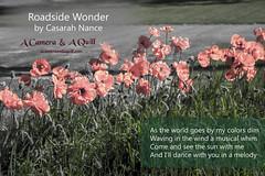 Roadside Wonder (casarahnance) Tags: county camera lake clare poem harrison thomas houghton quill poetryart nance roscomon casarah acameraandaquillcom