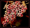 Berries a la Glow (gtncats) Tags: nature fruit bush berries ef70300mm topazlab canon70d photographyforrecreation infinitexposure topazglow