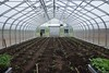 Tomatoes in the gound in greenhouse (ed dittenhoefer photo) Tags: houses plants hoop tomato greenhouse coltivare tc3barn