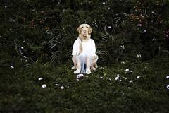 Self.portrait (Tc photography. Per) Tags: flowers dog pet selfportrait green me goldenretriever photomanipulation self natural photomontage effect multiexposure tcphotography