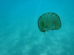 Sea dream (Arantxac1) Tags: ocean blue sea naturaleza sun love beach nature water animal azul mar andaluca agua jellyfish waves underwater vida jelly medusa mediterrneo mlaga oceano zoologa cnidario