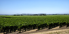Alexander Valley (lennycarl08) Tags: california northerncalifornia vineyard wine grapes sonomacounty winecountry