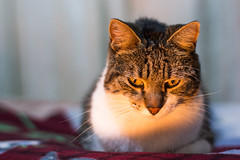 Kai en Invierno (Leonel Gallard) Tags: pet cats pets cute argentina cat canon photography eos 50mm photographer 14 365 ef fotgrafo leonel argentino argentinean gallard 60d eos60d