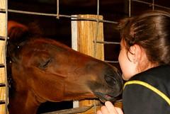 Baby love (LaLa83) Tags: summer horse love girl animal barn friend farm sony country july alpha equine 2016 standardbred a230 gaitedhorse