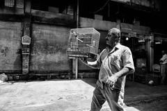 My little bird (Saman A. Ali) Tags: street streetphotography stphotografia blackwhite blackandwhite monochrome light shadow dark documentary fujifilm fujifilmxt1 fujinon 16mmf14 outdoor people photojournalism portrait lifestyle bird candid candidstreet
