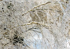 Deck in ice storm 1994 (PattiW2008) Tags: ice tree nj